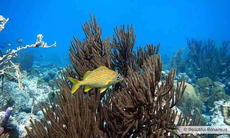 Fish zee online dating