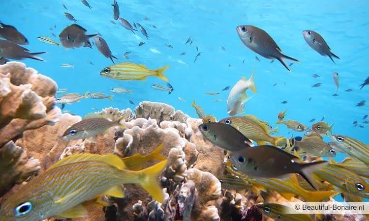 veel vis uit het Engels Deutschland online dating